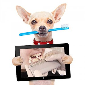 Collage-dog-with-pad