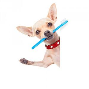 Dog_tothbrush_2