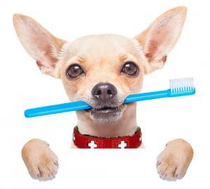 Tandfasader_dog